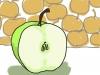 Half an apple.iPad drawing. 2012